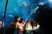Tunnel shark_ray[1]