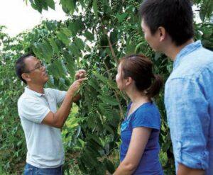 ハワイ島のUCCコーヒー農園