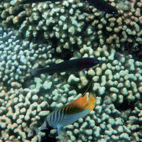 サンドバーの珊瑚礁