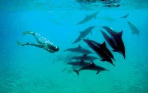 イルカと泳ぐゆりこさん。 泳ぐたびに何かを気付かせてくれるのだそうだ