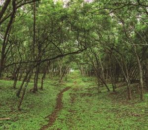 アロヒラニ:森