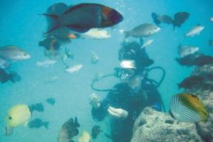 スキューバダイビング_魚の群れ